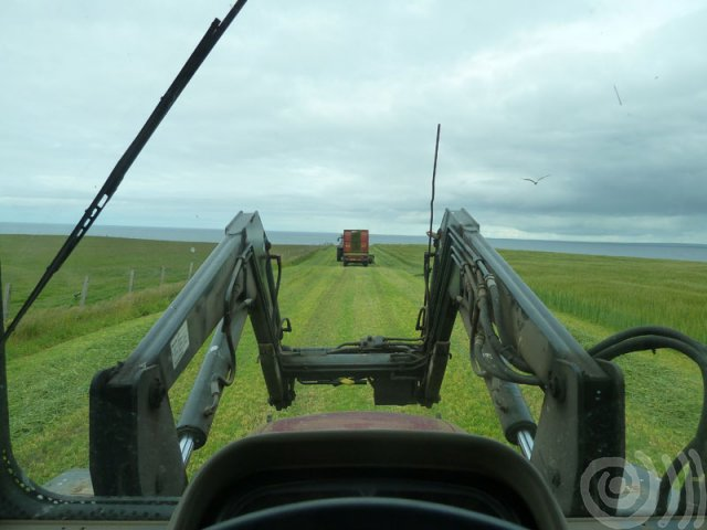 Following the harvester
